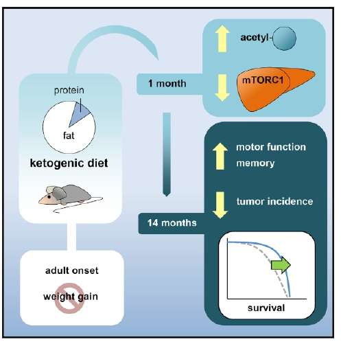 A Ketogenic Diet Extends Longevity and Healthspan | Cmi ...