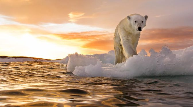 There Is No Climate Emergency – Letter